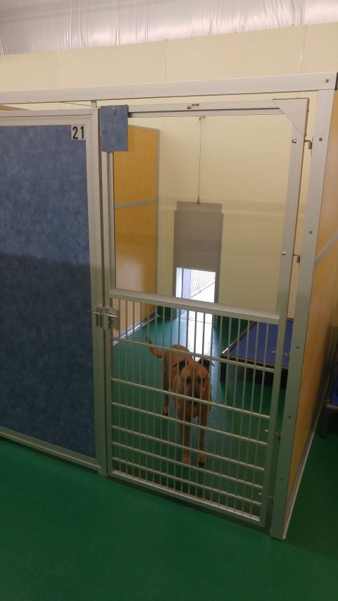 Boarding - Indoor outdoor w dog2